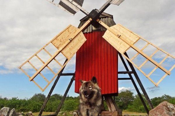 Schwedenurlaub 07.2015