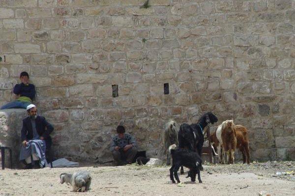 Visit to Palestine