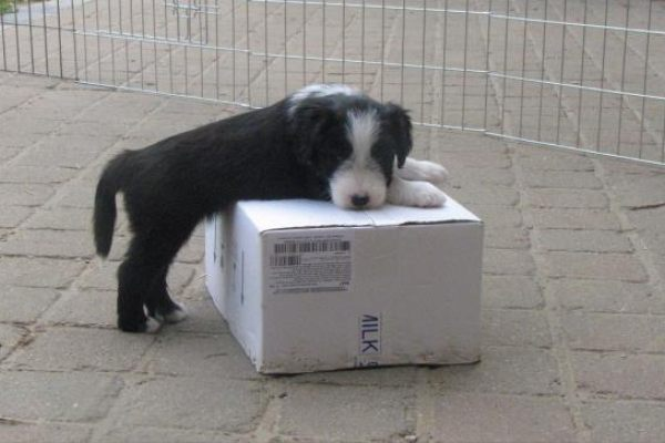 Khemze's pups week 6