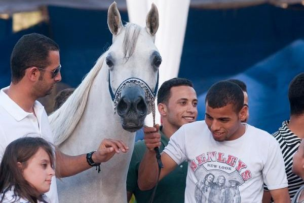 The Egyptian National Arabian Horse Championship - April 2012