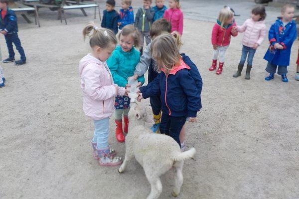 K1b Schoolreis kinderboerderij