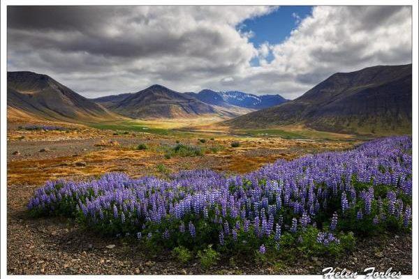 Iceland - The Westfjords