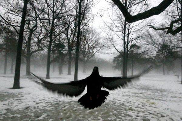 Alone in Winter - Tatiana Bitir